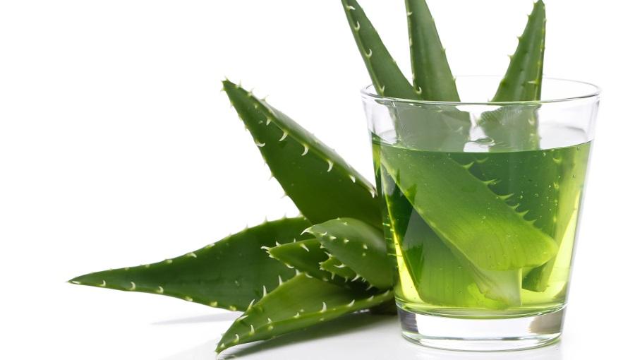 Aloe vera & aloe lé és kozmetikai felhasználásuk